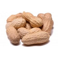 Peanuts in Shell Raw