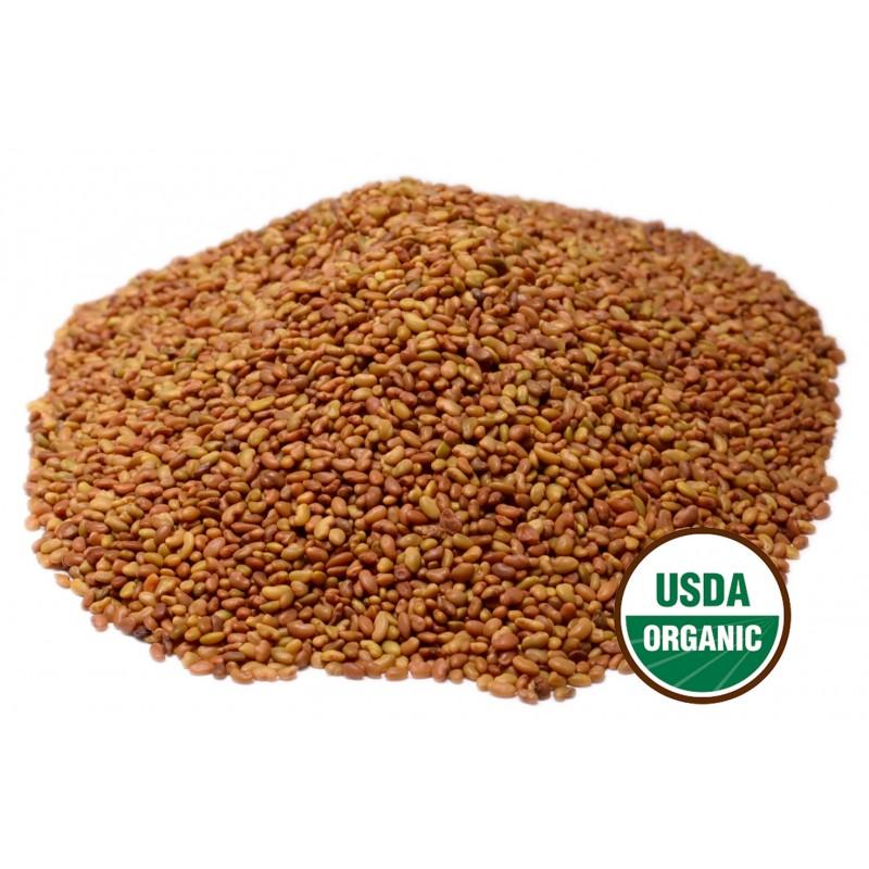 Alfalfa Sprouting Seeds Organic