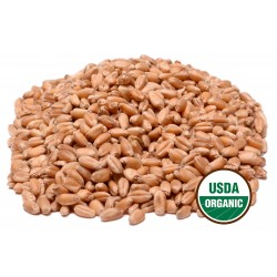 Organic Hard Wheat Kernels